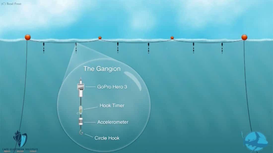 Interesting shark study in the bahamas epic diving for Shark fishing rigs