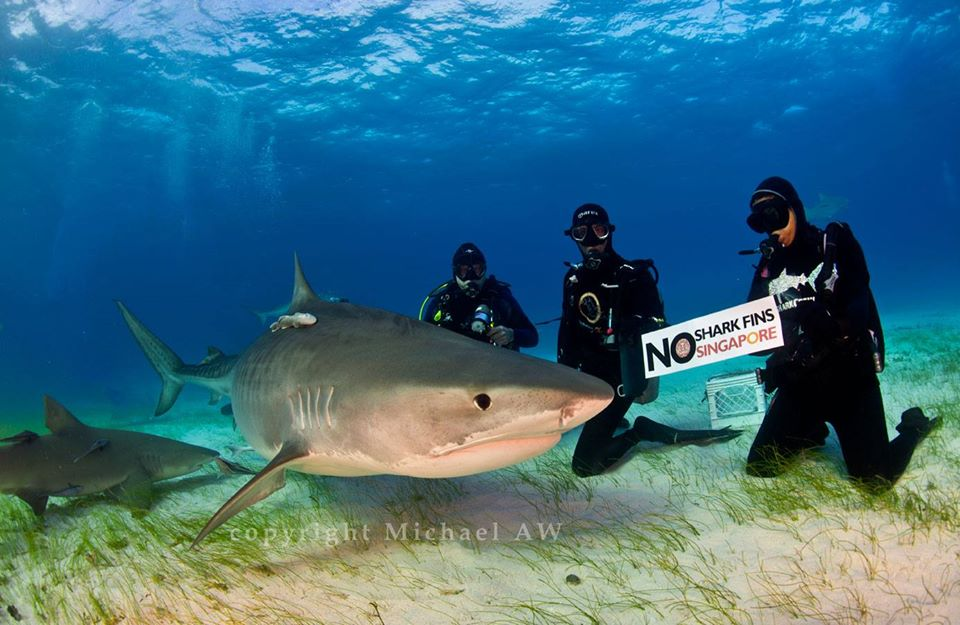 shark finning Here you'll come to know some of the most interesting shark finning facts shark finning refers to the removal and retention of shark fins with the rest of the shark normally being discarded at sea.