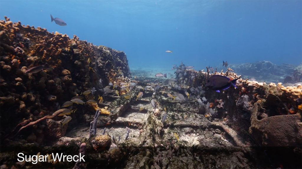 shipwreck sugar wreck grand bahama