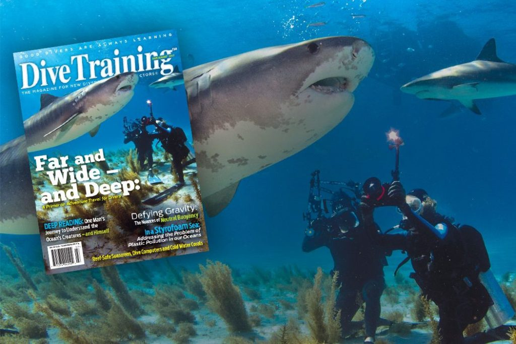 tiger beach diving shark cover