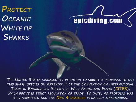 protect oceanic whitetip sharks