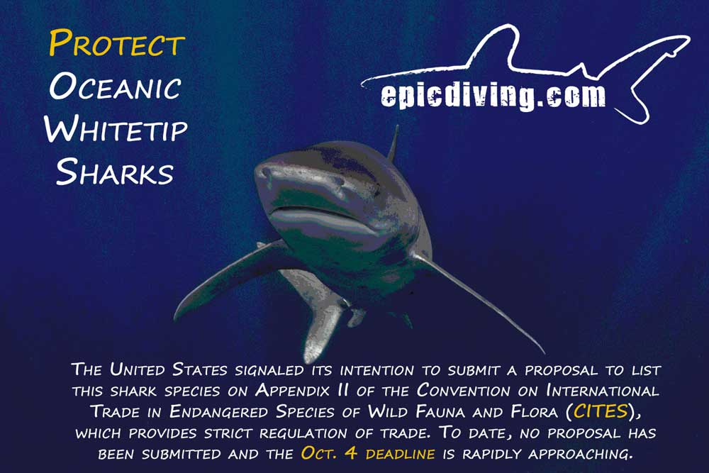 oceanic whitetip sharks at CITES
