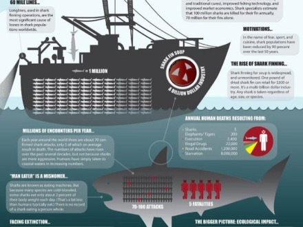 man vs shark infographic