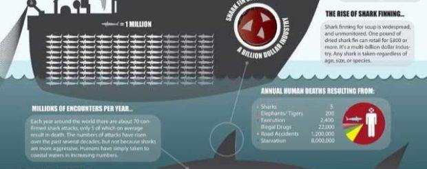 man vs shark infographic