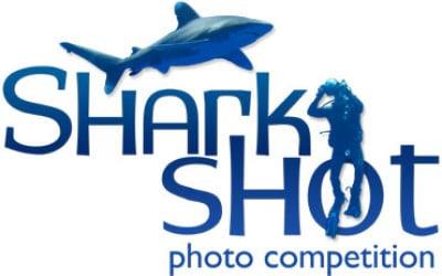 shark photography competition