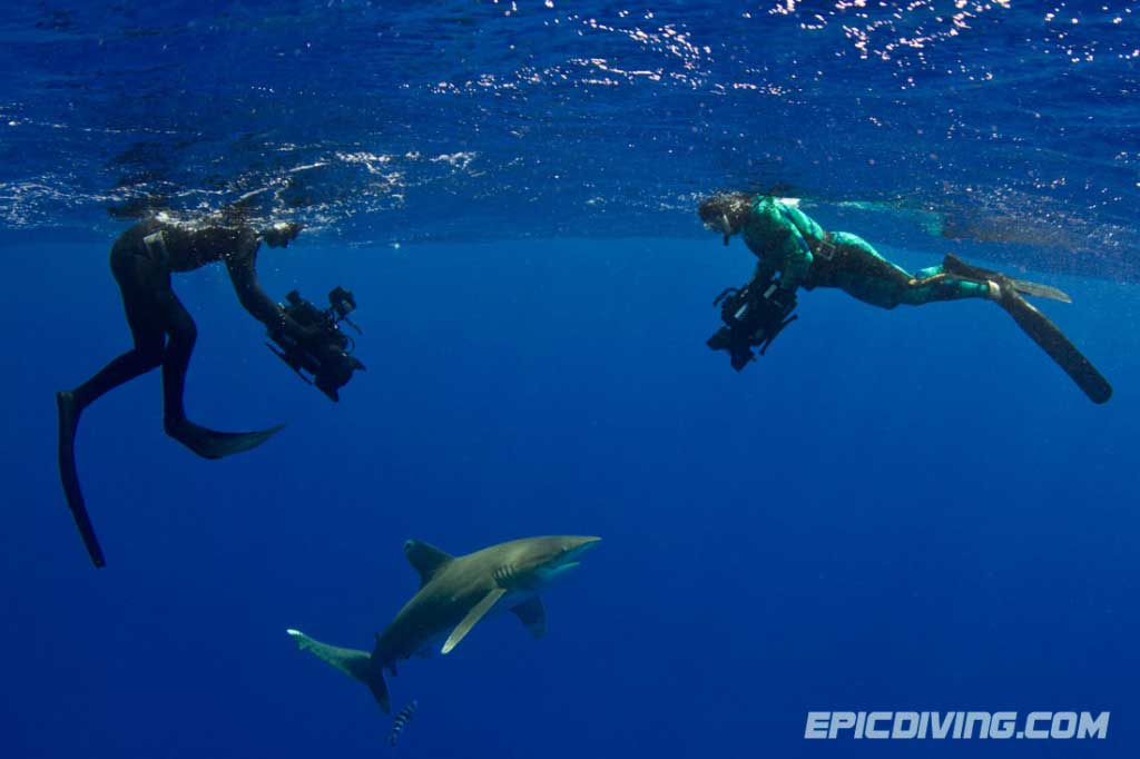 epic diving discovery channel shark week