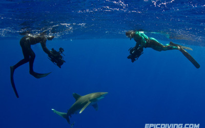 shark week epic diving oceanic whitetip