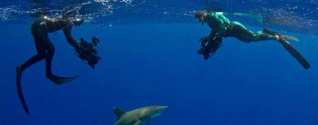 shark week epic diving oceanic whitetip