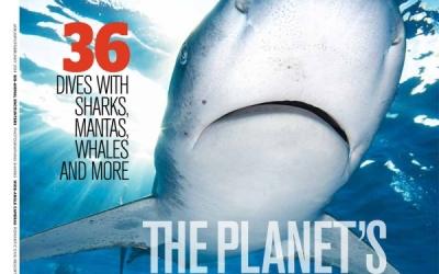 oceanic whitetip shark magazine cover