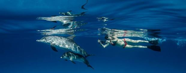 swim with dolphin in bimini bahamas