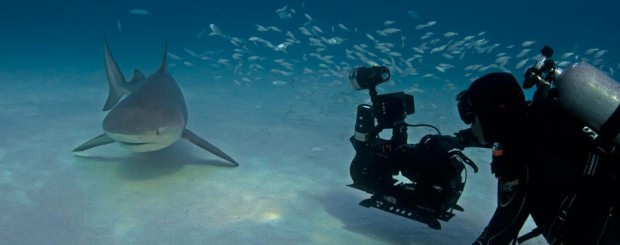 howard hall filming a bull shark