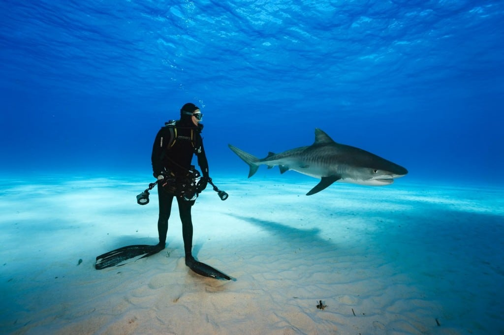 diver and tiger shark at tiger beach