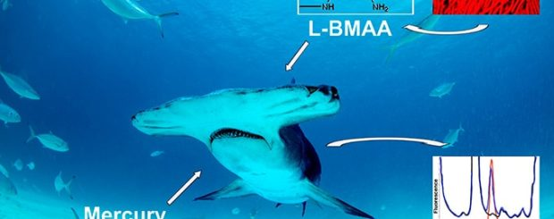shark meat and fin toxins