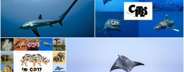 cites 2016 sharks and rays