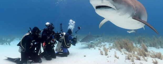 best shark diving bahamas